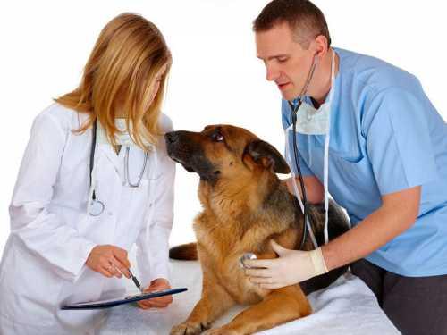 Como melhorar o atendimento em laboratórios veterinários?