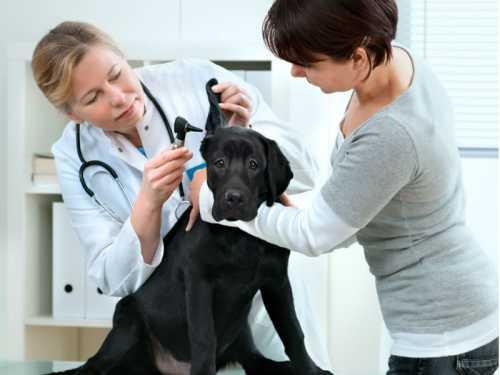 Como melhorar o relacionamento com os pacientes (humanos e animais)