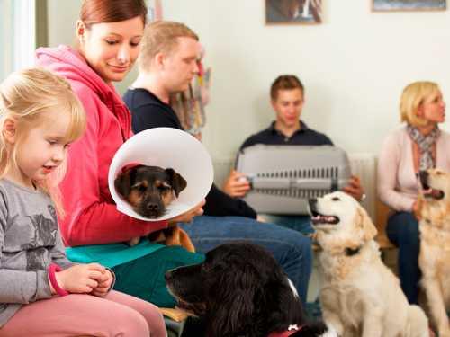 Como trazer mais pacientes para seu laboratório veterinário