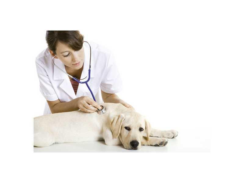 Software para laboratório veterinário